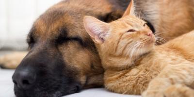 Hundebetten, Körbe und Decken