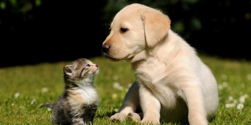Hund spielt mit Katze auf Wiese