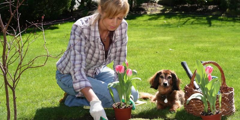 Hund draussen im Garten