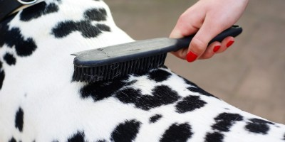 Was Sie für Fidos Fellpflege brauchen