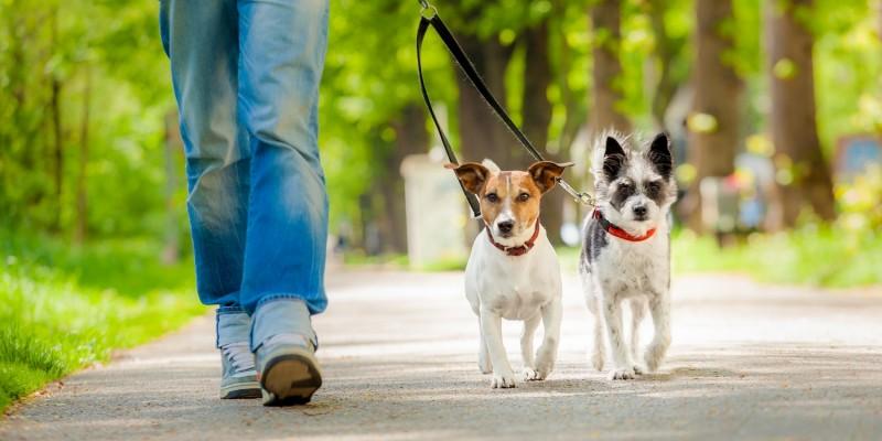 Frau mit Hunden unterwegs