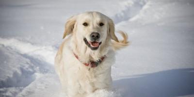 Hundekleidung - Schutz und Zierde