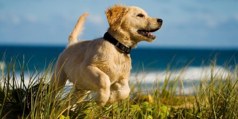 Hund im Wind am Meer