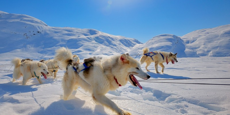 Hunde im Schnee und Natur