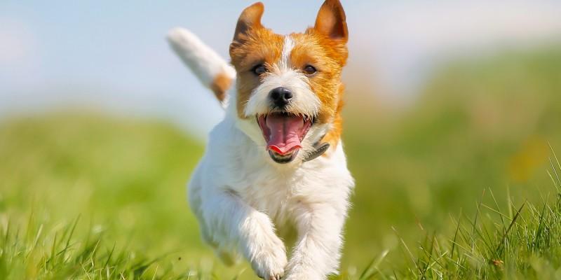 Hund beim Spielen draussen
