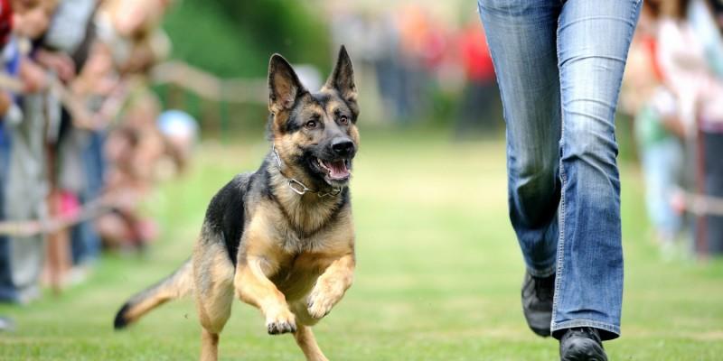 Hund beim Laufen - hat gefressen