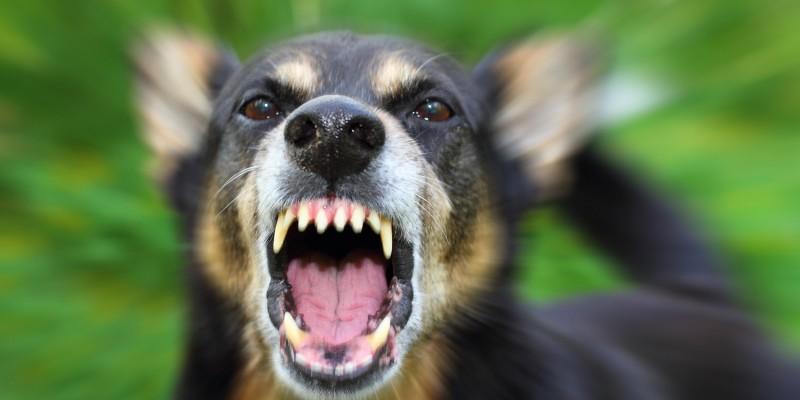 Hund am Bellen