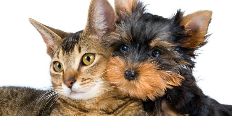 Hund spielt mit Katze
